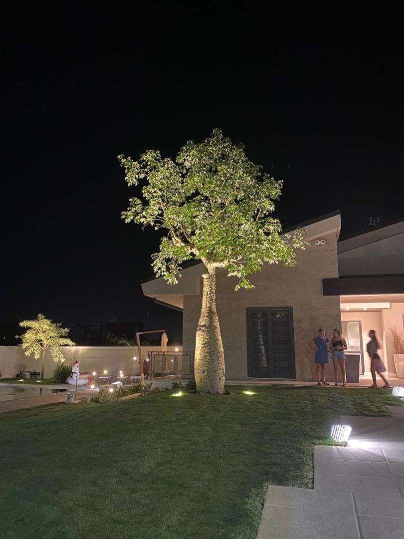 Illuminazione di un giardino con un grande albero. Salvatore Gagliano e Daniele Proietti. Ornus